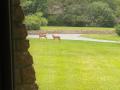 8-Deer